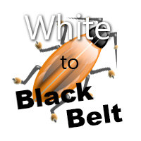 Firebug - White to Black Belt